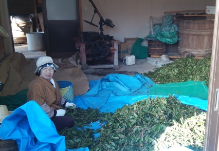 阿波晩茶製造風景1