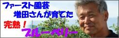 ファースト園芸増田さんが育てた完熟ブルーベリー!