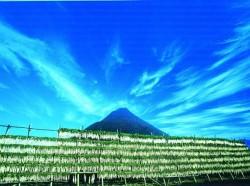 大根を天日干しにする風景2